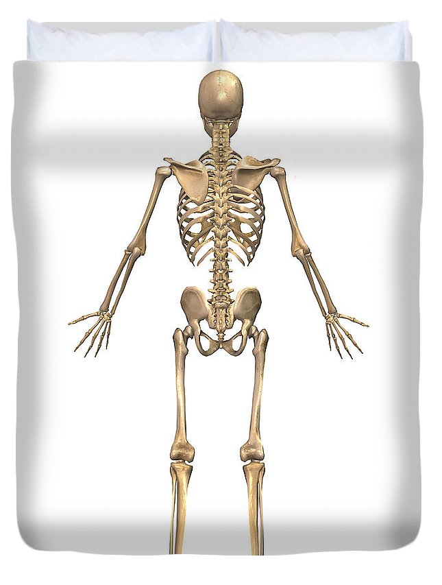 Human Skeletal System Back View Duvet Cover For Sale By Stocktrek