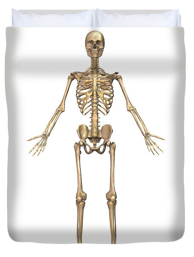 Human Skeletal System Front View Duvet Cover For Sale By Stocktrek