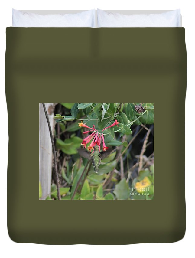 Bird Duvet Cover featuring the photograph Humming Bird At Honey Suckle Vine by Kenny Glotfelty