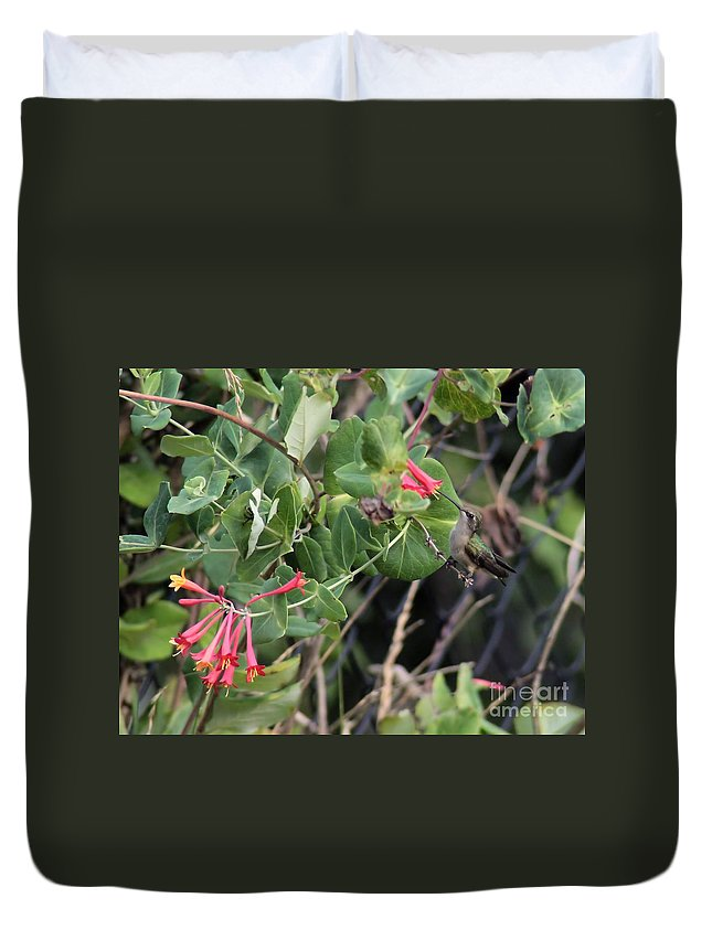 Bird Duvet Cover featuring the photograph Humming Bird Perching On Vine by Kenny Glotfelty