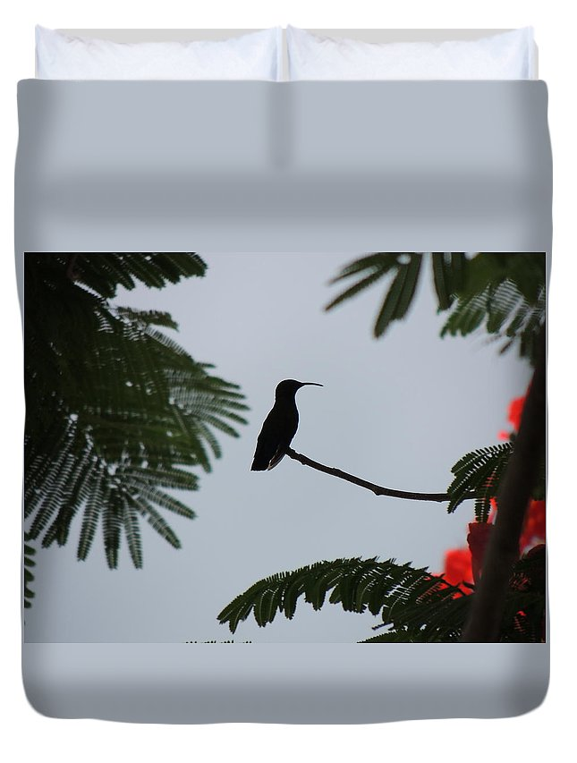 Silhouette Duvet Cover featuring the photograph Hummingbird Silhouette by Kimberly Perry