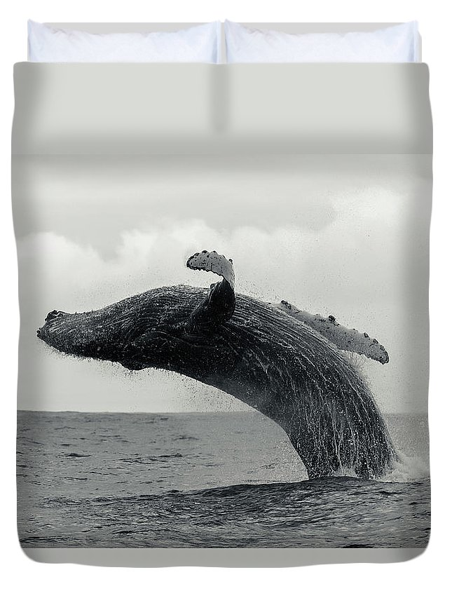 Underwater Duvet Cover featuring the photograph Humpback Whale Breaching Against A by By Wildestanimal