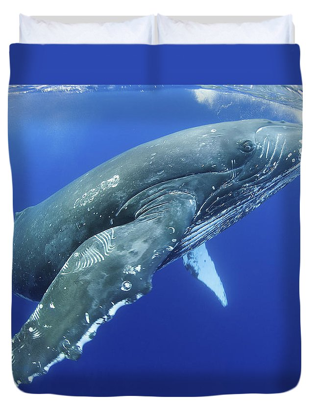 Above Duvet Cover featuring the photograph Humpback Whale Near Surface by M Swiet Productions