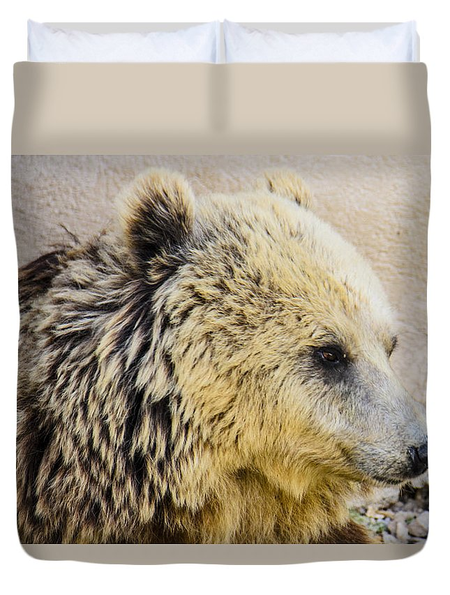 Animal Photographs Duvet Cover featuring the photograph Hungry Bear by Sotiris Filippou