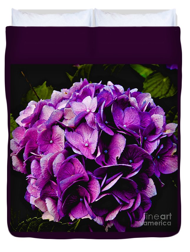 Hydrangea Duvet Cover featuring the photograph Hydrangea by William Norton