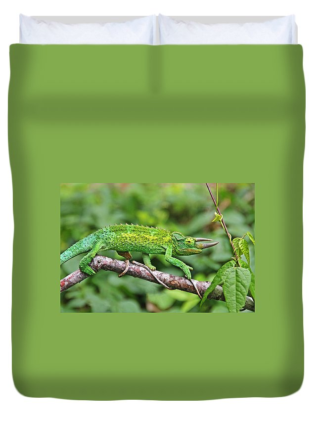 Green Animals Duvet Cover featuring the photograph I Am Not A Pickle by Peggy Collins