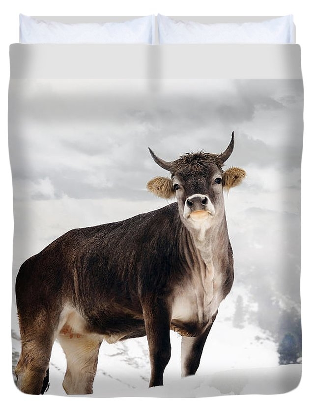 Animal Duvet Cover featuring the photograph I Don't Like Snow by Annie Snel