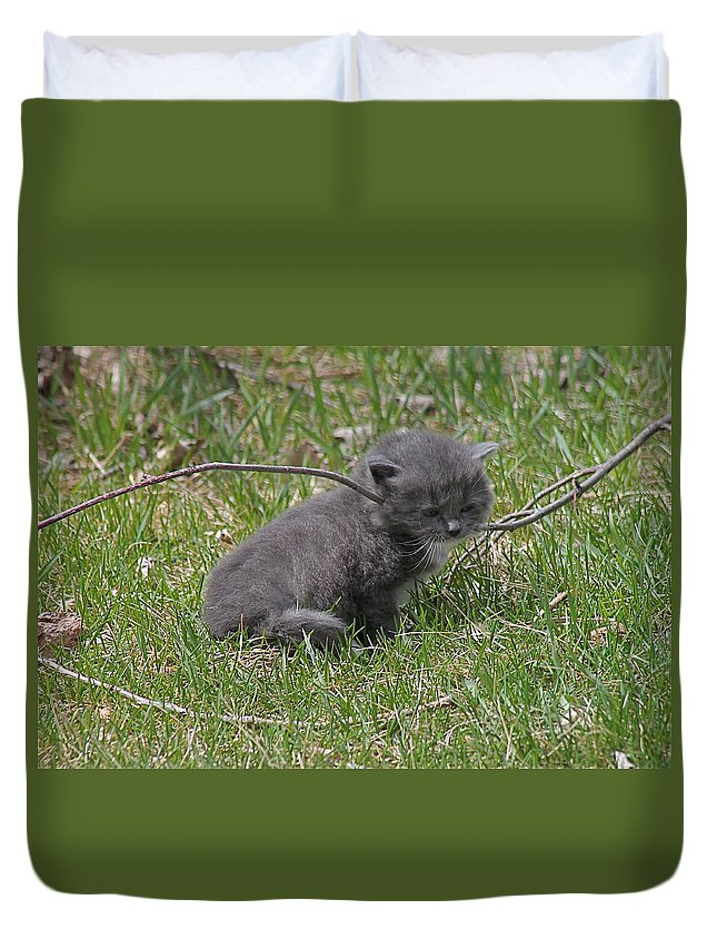 Cats Duvet Cover featuring the photograph I Might Be Stuck by Wayne Williams