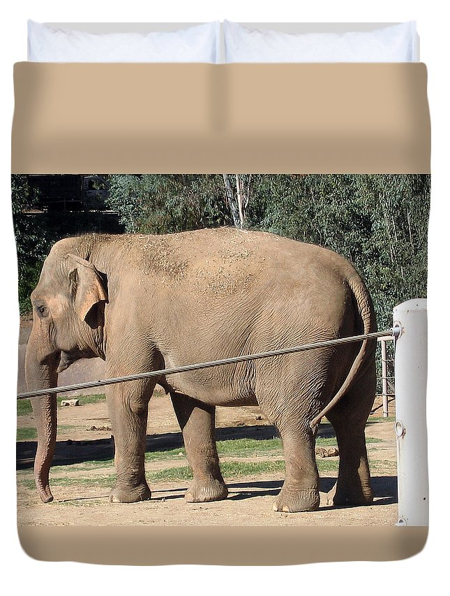 Animals Duvet Cover featuring the photograph I Need A Drink by Jay Milo