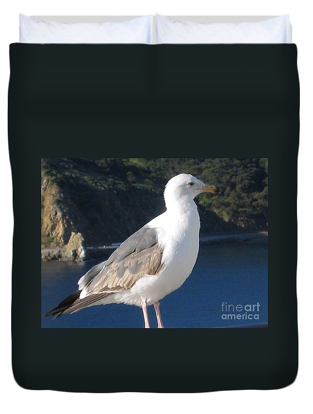 Animals Duvet Cover featuring the photograph I Posed For You Now Feed Me Please by Jay Milo