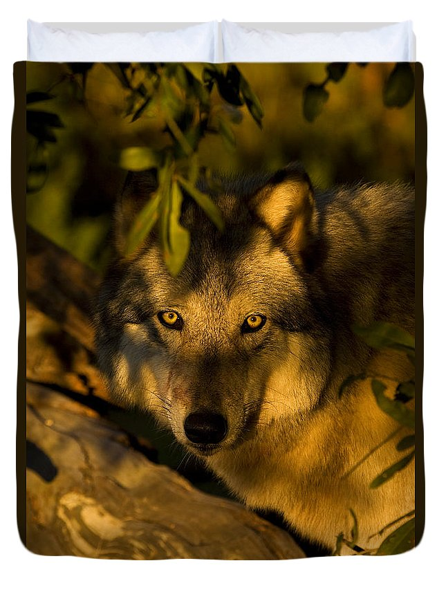 Wolf Duvet Cover featuring the photograph I See You by Jack Milchanowski
