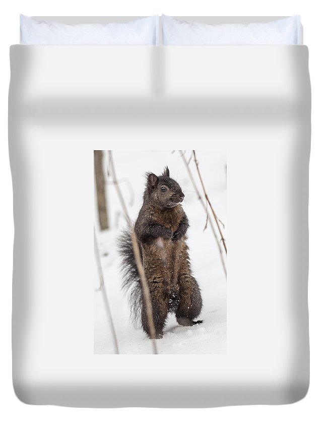Squirrel Duvet Cover featuring the photograph I See You by Richard Kitchen