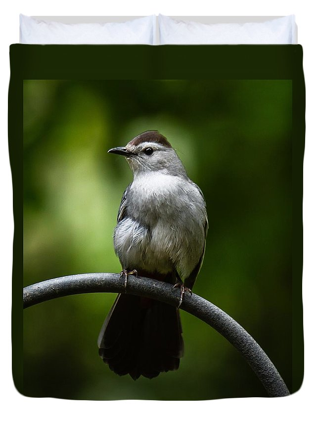 Gray Catbird Duvet Cover featuring the photograph I Work Out by Robert L Jackson