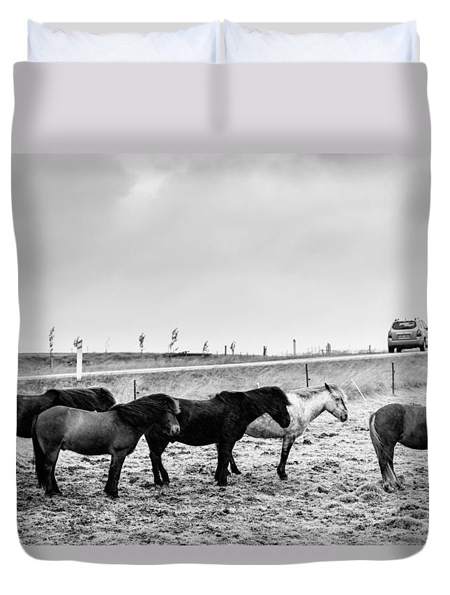 Europe Duvet Cover featuring the photograph Icelandic Ponies by Alexey Stiop