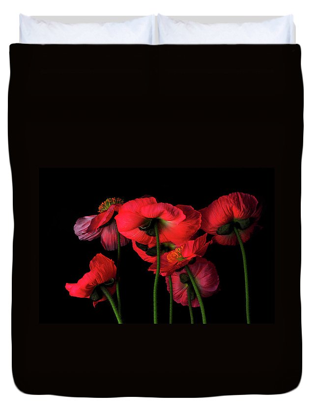 California Duvet Cover featuring the photograph Icelandic Poppies - The View From Down by Bill Gracey