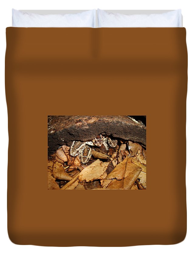 Puff Adder Duvet Cover featuring the photograph Identity Crisis Baby Puff Adders Bitis Arietans by Tracey Beer