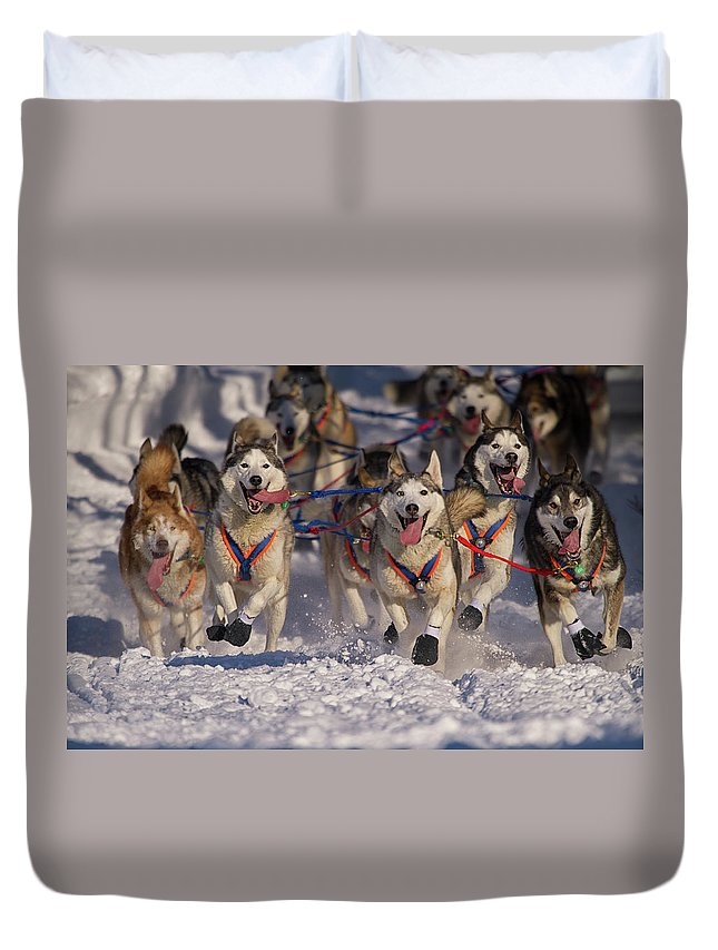 Snow Duvet Cover featuring the photograph Iditarod Huskies by Alaska Photography