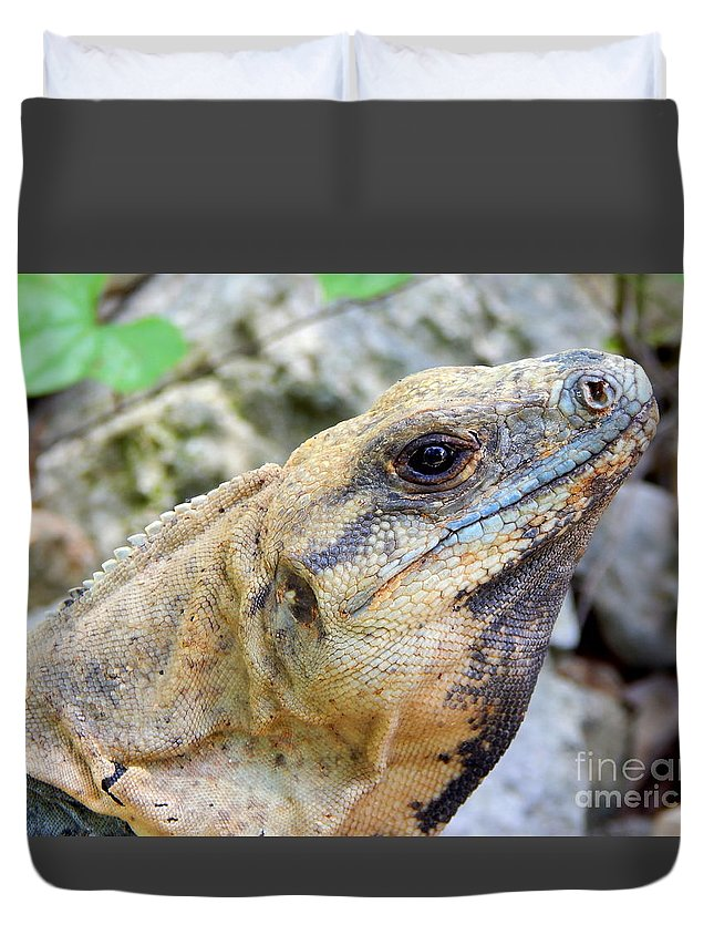 Mexico Photos Duvet Cover featuring the photograph Iguana Of The Uxmal Pyramids In Yucatan Mexico by Michael Hoard