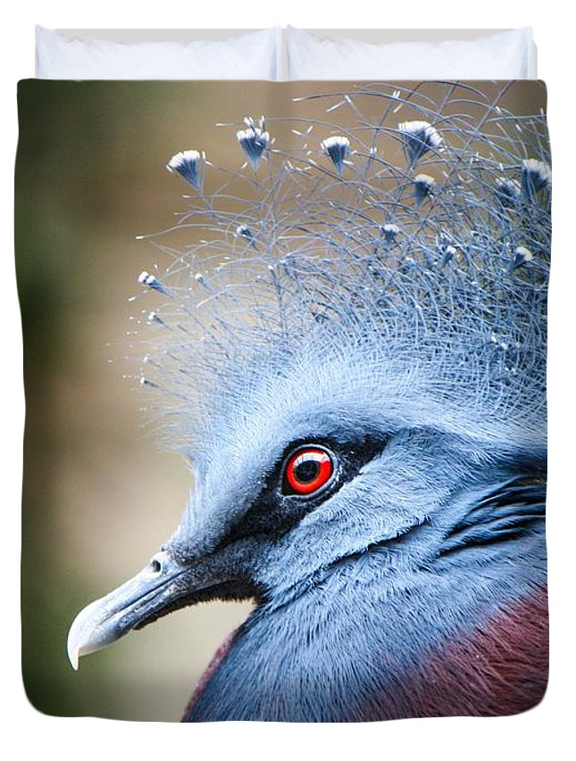 Pigeon Duvet Cover featuring the photograph Illustrious by Heather King