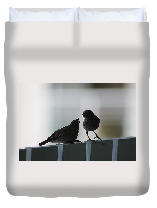 Birds Duvet Cover featuring the photograph I'm Hungry by Catie Canetti
