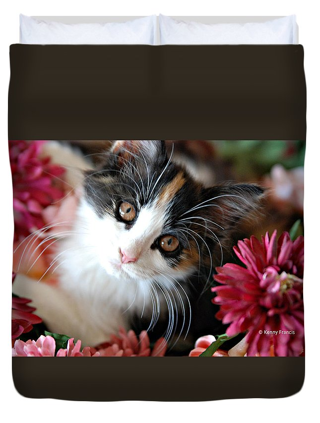 Cats Duvet Cover featuring the photograph I'm Just So Adorable by Kenny Francis