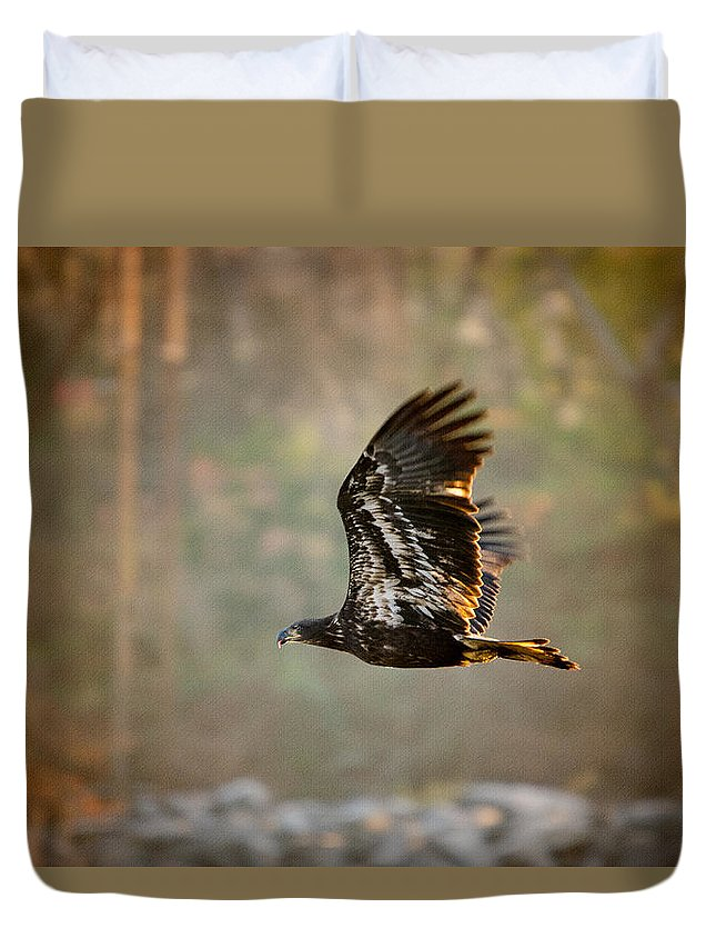 Bald Duvet Cover featuring the photograph Immature Bald Eagle by Crystal Wightman