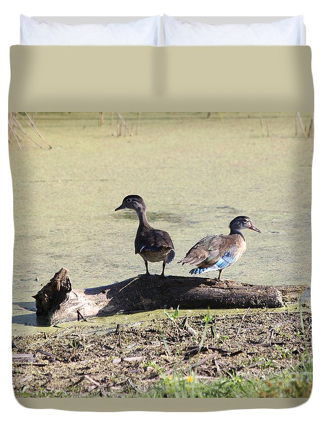 Wood Duck Duvet Cover featuring the photograph Immature Wood Ducks by Lori Tordsen