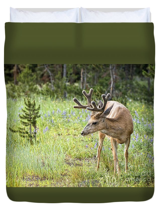 Deer Duvet Cover featuring the photograph In The Grass by Claudia Kuhn