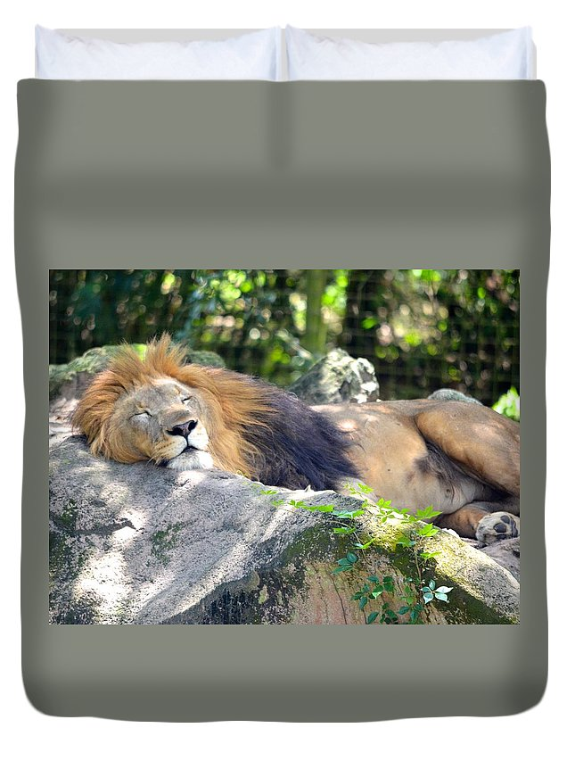 Jacksonville Duvet Cover featuring the photograph In The Jungle The Mighty Jungle by Richard Bryce and Family