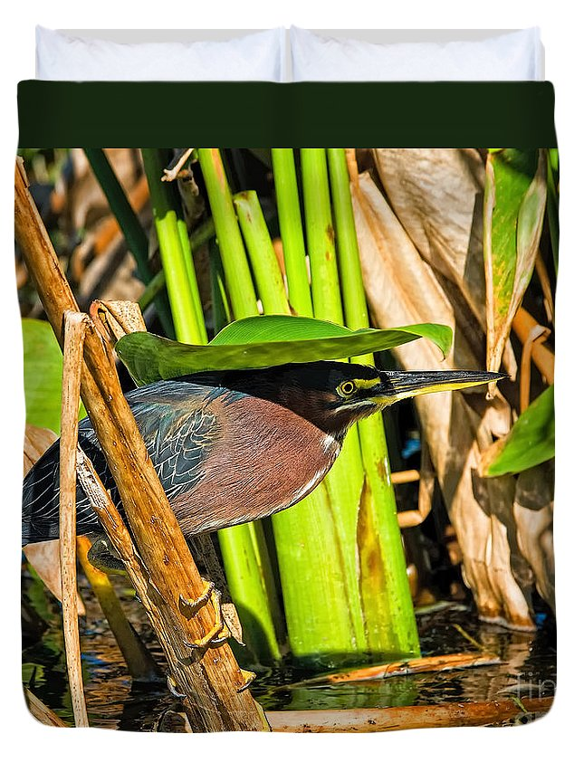 Little Green Heron Duvet Cover featuring the photograph In The Shade Little Green Heron by Timothy Flanigan