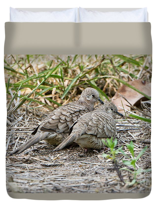Inca Dove Duvet Cover featuring the photograph Inca Doves by Anthony Mercieca