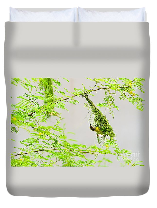 Indian Baya Or Black Chinned Weaver Bird Or Ploceus Nigrimentus Making Nest  Duvet Cover
