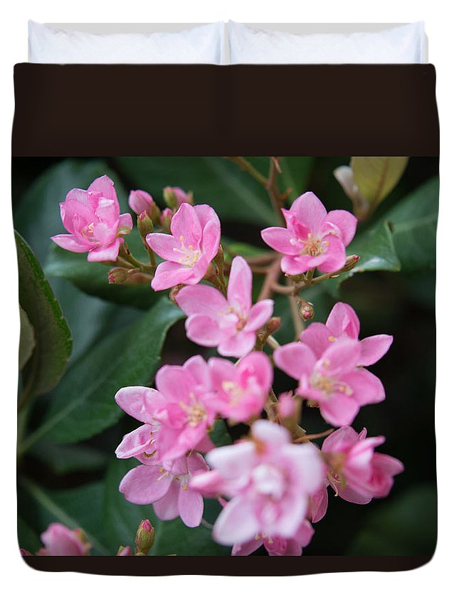 Texas Flower Duvet Cover featuring the photograph Indian Hawthorn Blossoms by JG Thompson