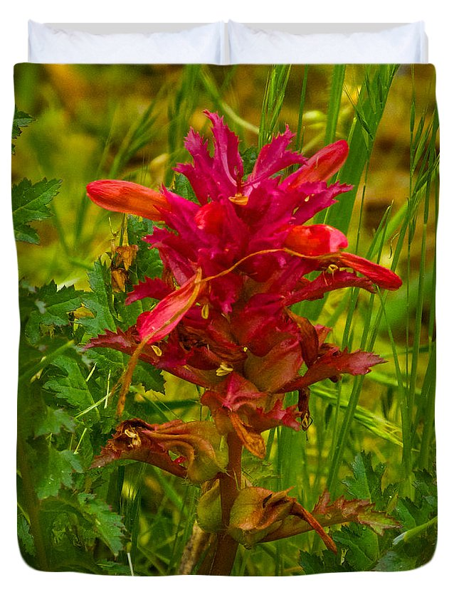 Indian Warrior Duvet Cover featuring the photograph Indian Warrior In Park Sierra-ca by Ruth Hager