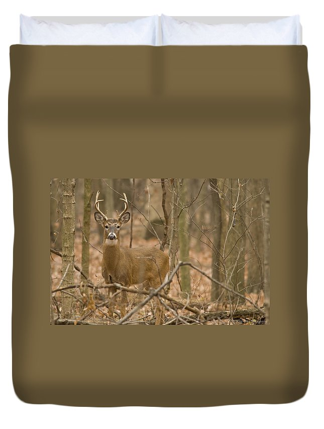 Buck Duvet Cover featuring the photograph Indiana Buck by Crystal Heitzman Renskers