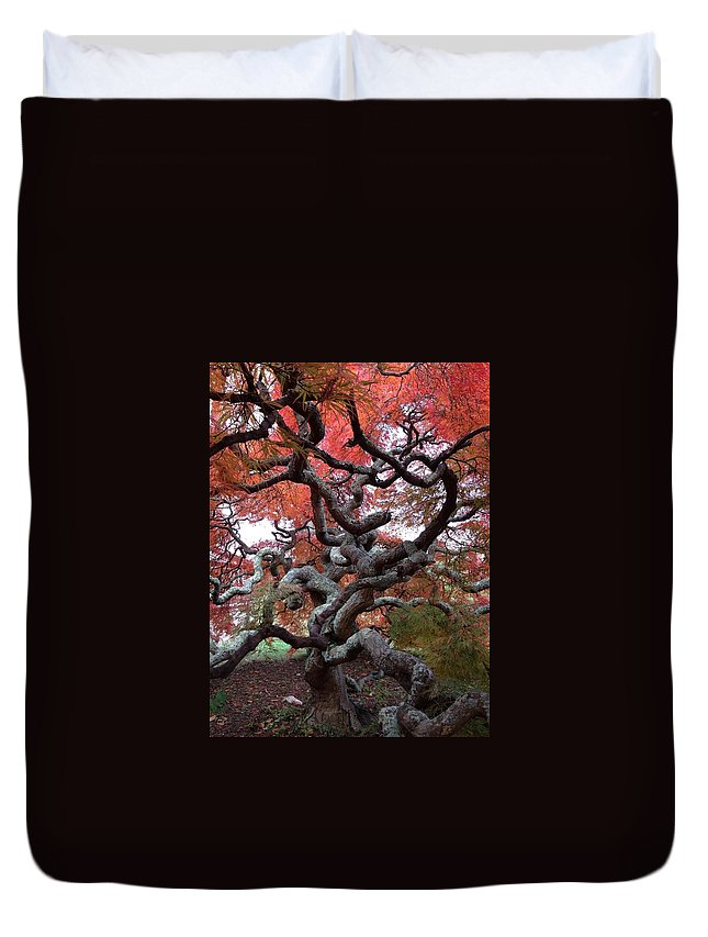Japanese Maple Duvet Cover featuring the photograph Inside The Japanese Maple by Lois Ivancin Tavaf