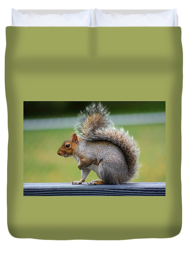 Amanda Stadther Duvet Cover featuring the photograph Interesting Tail by Amanda Stadther