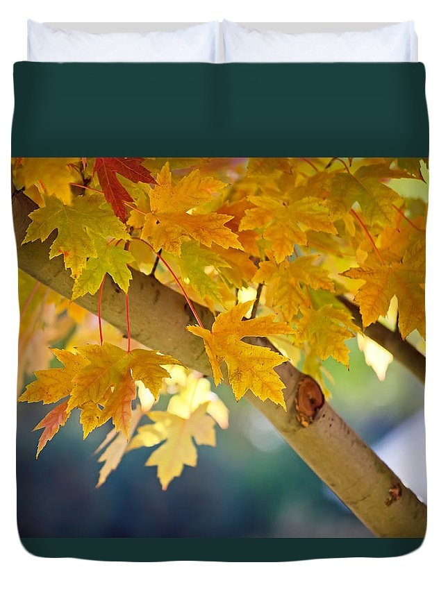 Autumn Fall Maple Tree Leaves Gold Green Red Duvet Cover featuring the photograph Iridescent 2 by Tracy Shrader