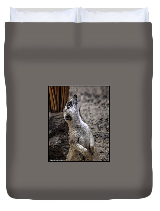 Dog Duvet Cover featuring the photograph Is It You God by LeeAnn McLaneGoetz McLaneGoetzStudioLLCcom