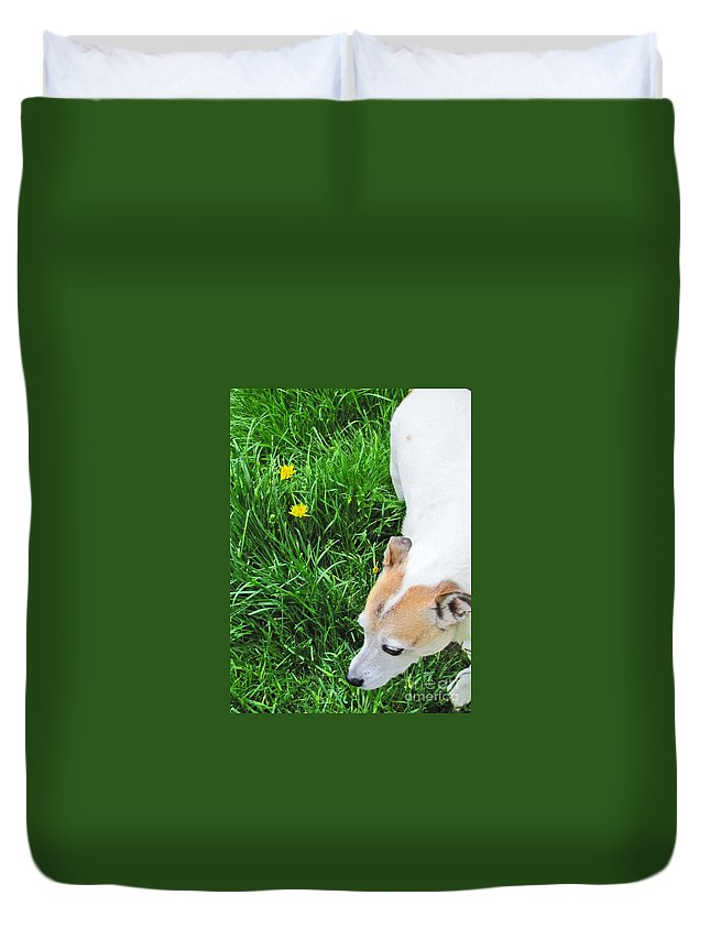 Dog Duvet Cover featuring the photograph Jack Russell Terrier by Minding My Visions by Adri and Ray