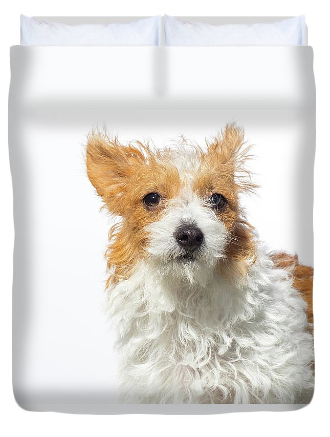 Pets Duvet Cover featuring the photograph Jack Russell Terrier - The Amanda by Amandafoundation.org