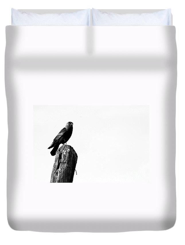 Jackdaw Duvet Cover featuring the photograph Jackdaw Bird by Bosko Martinovic