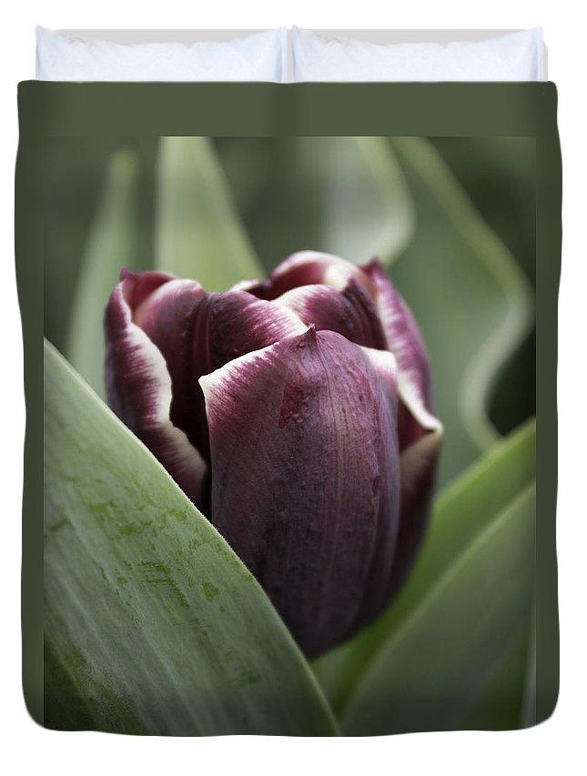 Joseph Skompski Duvet Cover featuring the photograph Jackpot Tulip by Joseph Skompski
