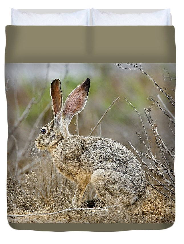 Nature Duvet Cover featuring the photograph Jackrabbit by Anthony Mercieca