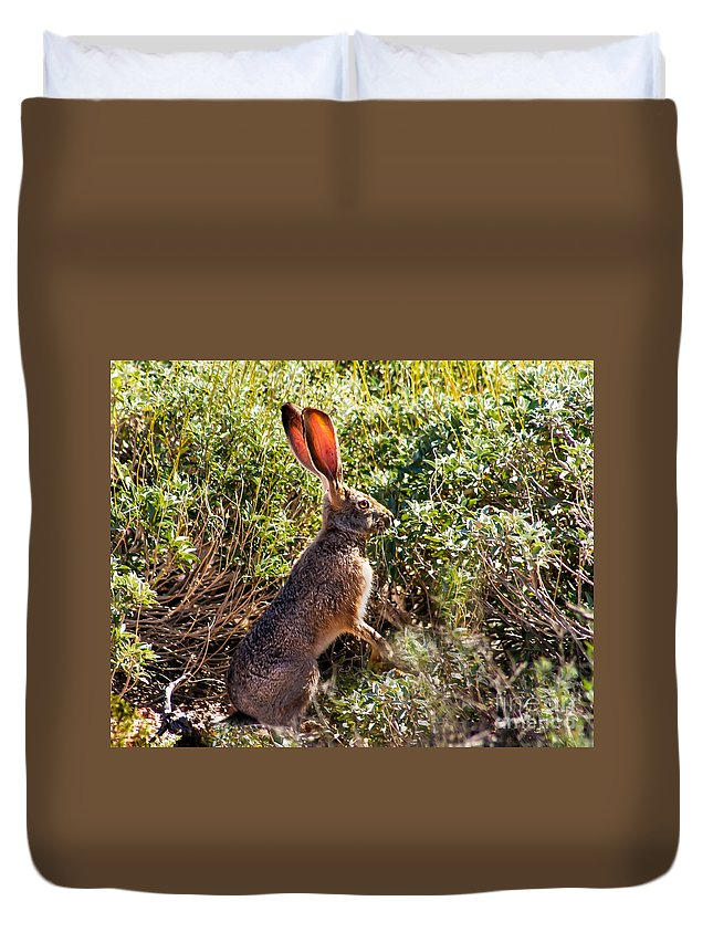 Hares Duvet Cover featuring the photograph Jackrabbit by Robert Bales