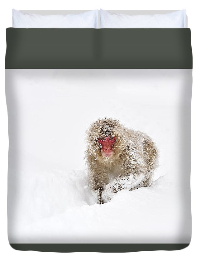 Thomas Marent Duvet Cover featuring the photograph Japanese Macaque In Snow Jigokudani by Thomas Marent