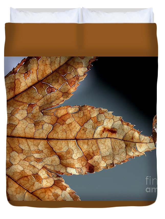 Brown Duvet Cover featuring the photograph Japanese Maple Leaf Brown - 1 by Kenny Glotfelty