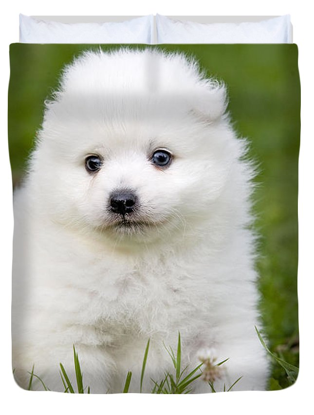 Japanese Spitz Puppy Duvet Cover For Sale By Jean Michel Labat