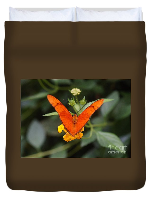 Nature Duvet Cover featuring the photograph Julia Butterfly 1 by Rudi Prott