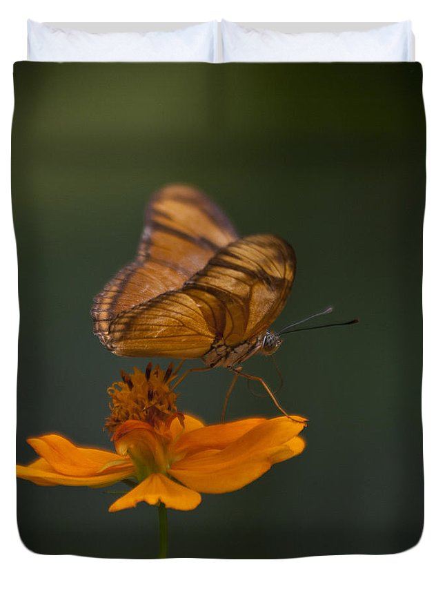 Heiko Duvet Cover featuring the photograph Julia Butterfly by Heiko Koehrer-Wagner